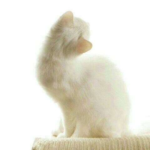 可爱兔子屏保图片