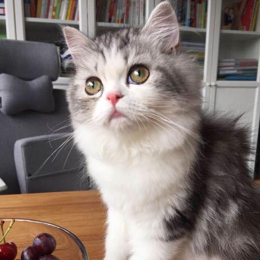 壁纸 动物 猫 猫咪 小猫 桌面 512_512