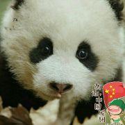 熊猫迷漾滚滚来