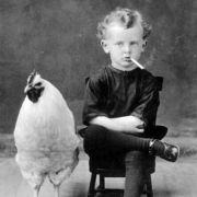 小鸡遇上豆豆
