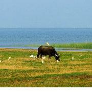 生态骆马湖
