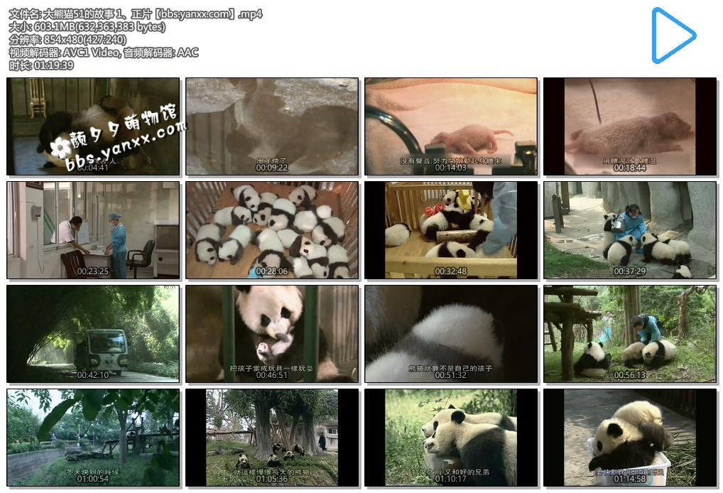 大熊猫纪录片–大熊猫51的故事(正片+花絮)日语中文字幕 高清下载图片 No.2