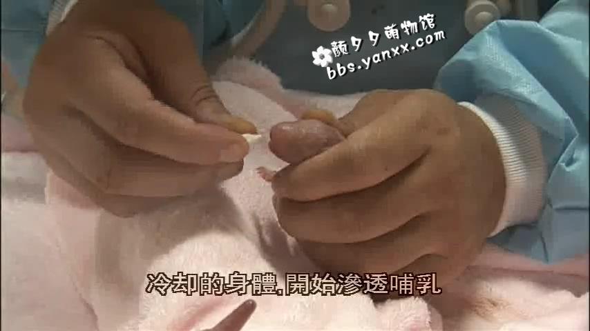 大熊猫纪录片–大熊猫51的故事(正片+花絮)日语中文字幕 高清下载图片 No.3