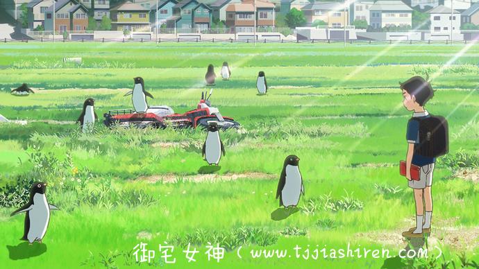 《企鹅公路》观影心得—一不小心就吸企鹅吸到忘我状态