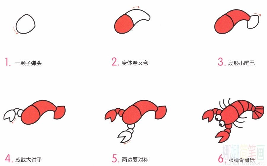 小龍蝦簡筆畫畫法及步驟_圖片 1