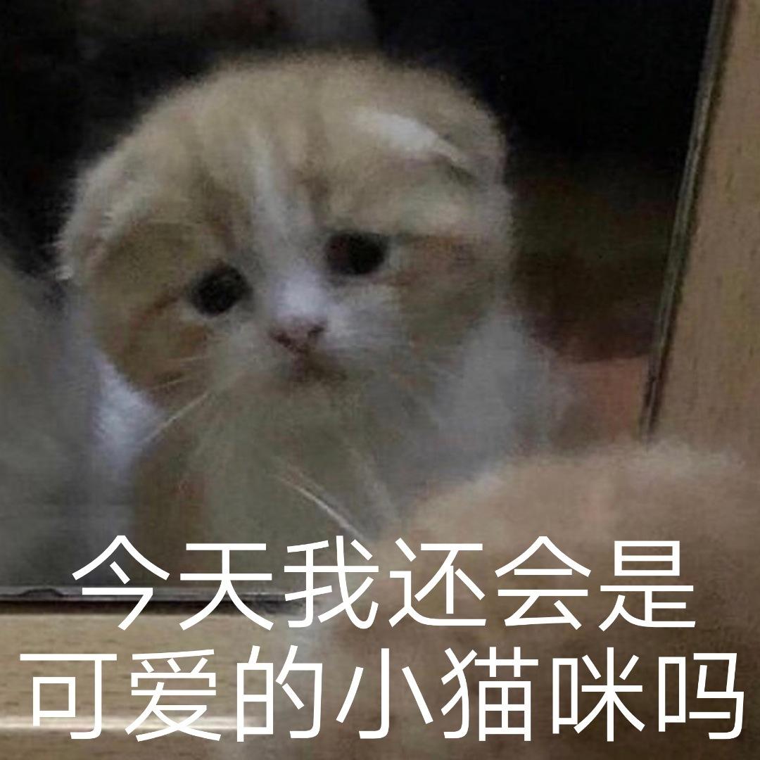今天我还会是可爱的小猫咪吗