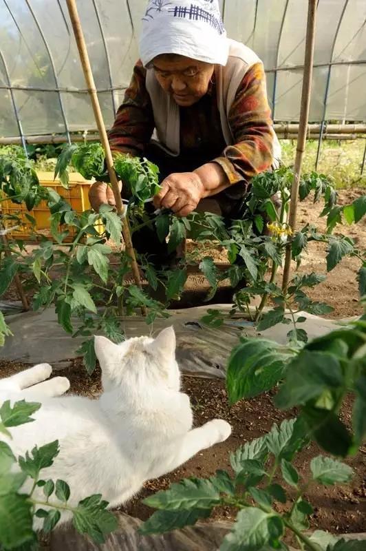 收养了一只聋猫的日本老人
