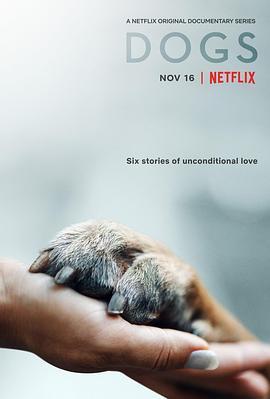 爱犬情深第一季