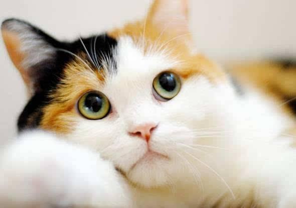 宅男情人:盘点动漫中那些最萌最可爱的小萝莉少女们!