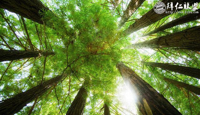 世界地球日(World Earth Day)每年4月22日3