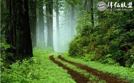 世界地球日(World Earth Day)每年4月22日4