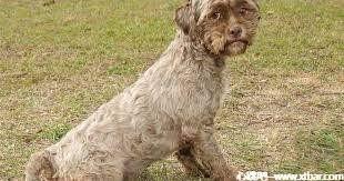 0085j6oIly1gi9z92wqdsj308m04j3yq - [日本都市传说]:人面犬,这就是中年社畜吧!