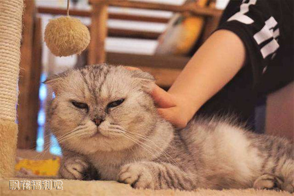 撸猫缓解老年痴呆