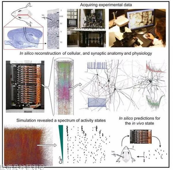 模拟人脑项目