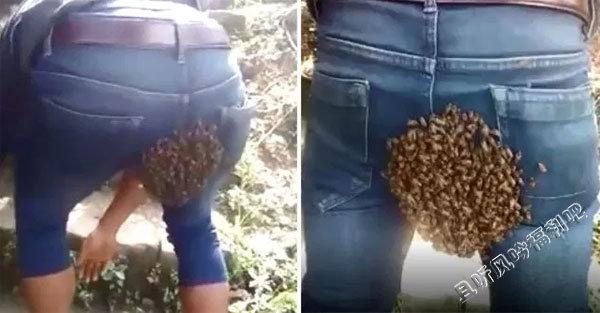 小伙臀部惨遭蜜蜂群筑巢