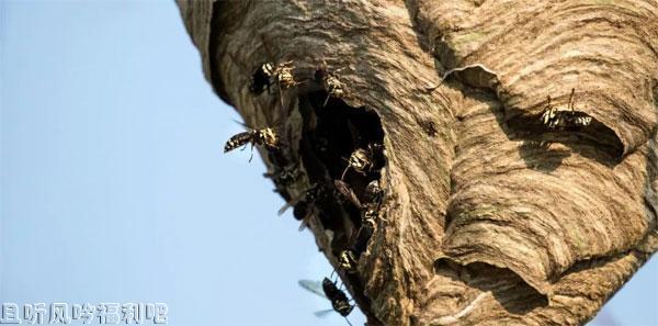 六腿兵团昆虫