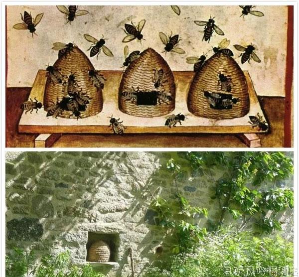 蜂洞(Bee bole)