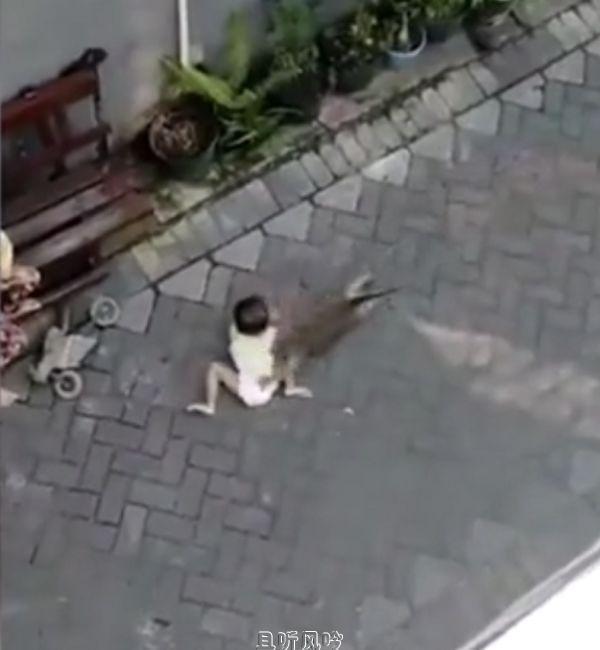 猴子骑自行车抢幼童