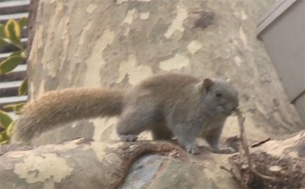 杭州西湖网红松鼠