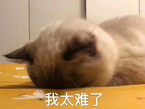我太难了猫咪埋着头表情包