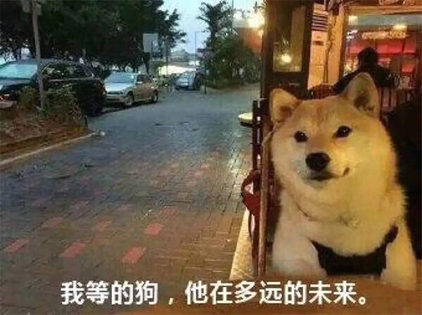 单身狗表情包:我等的狗他在多远的未来