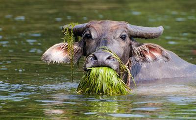 老牛吃嫩草表情包合集