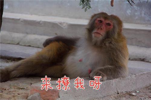 猴子好撩人表情包