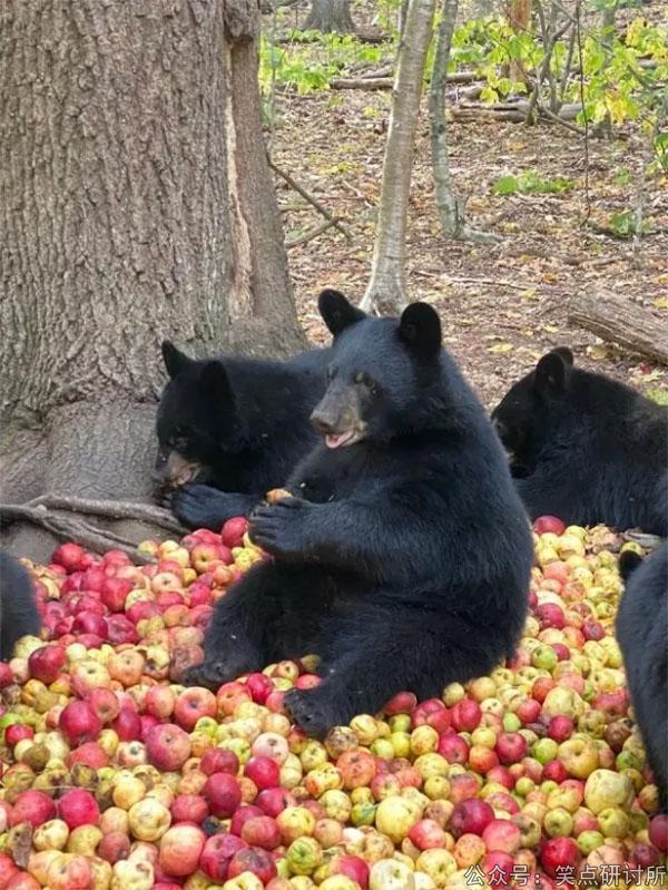 黑熊:苹果滞销,帮帮我们