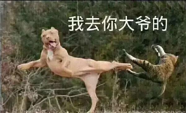 我去你大爷的狗狗踢猫表情