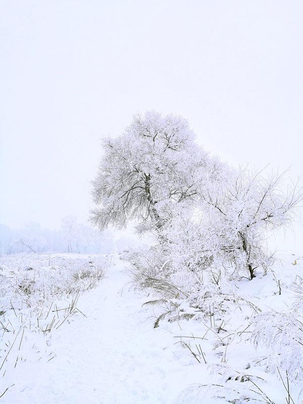 雪乡雾凇岛