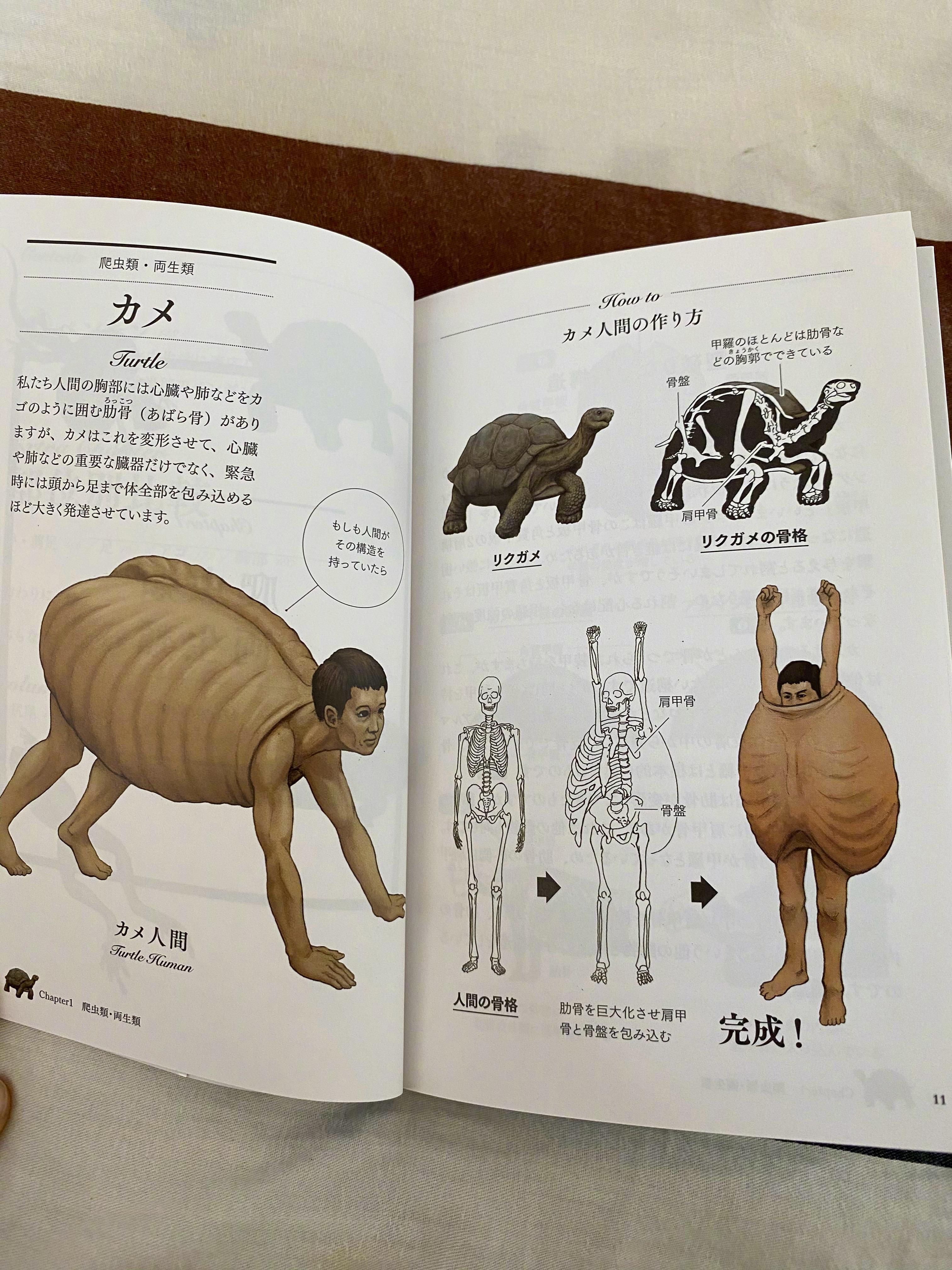 古生物画师川崎悟司的奇葩科普图鉴