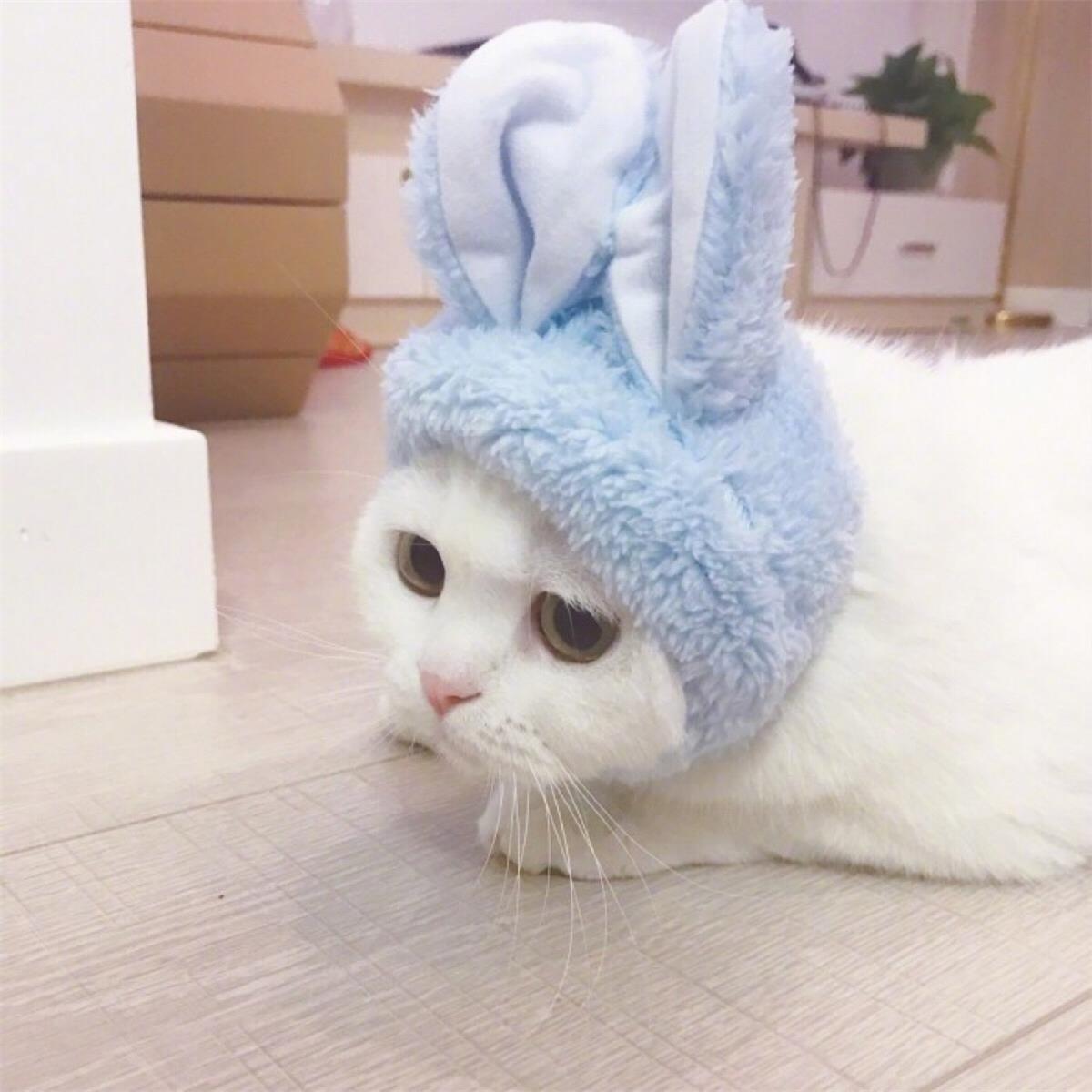 可爱兔兔高清情侣头像 第19张