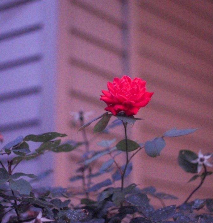 itotii晚安说说短语191019:你是我的心头一热,也是我的不动声色