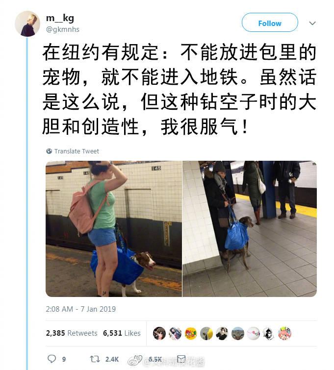 在纽约不能放进包里的宠物就不能进入地铁 第19张