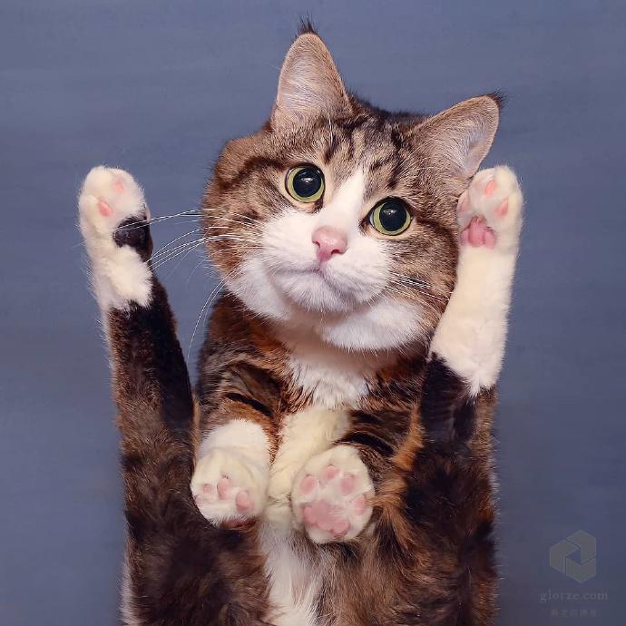 ins超火表情猫rexiecat分分钟表情包无损套图视频下载 第8张