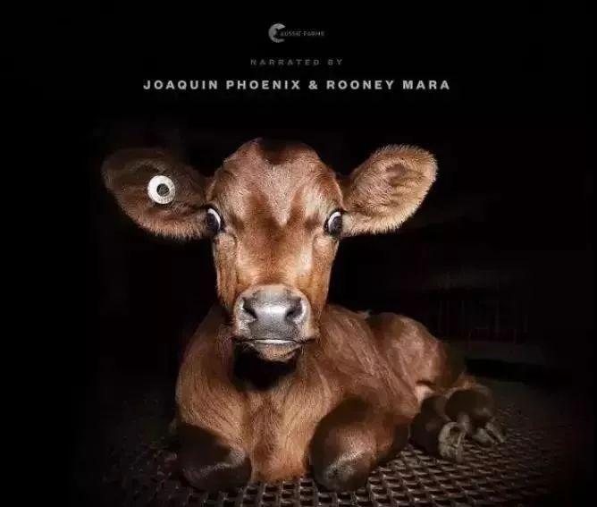 别问我为什么不吃肉,看完这部纪录片,谁还能吃下