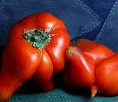 西红柿成精了