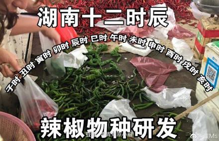 湖南十二时辰:辣椒物种研发