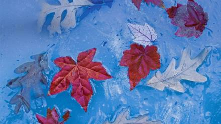 普莱斯湖中冰封的秋叶