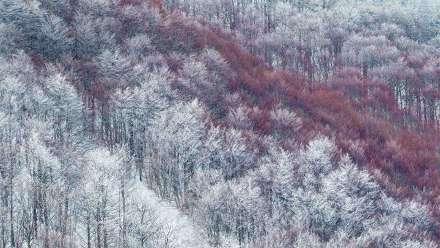 部分被雪覆盖的Val Cervara山坡上的老山毛榉林
