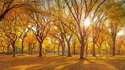 中央公园购物中心的美国榆树丛