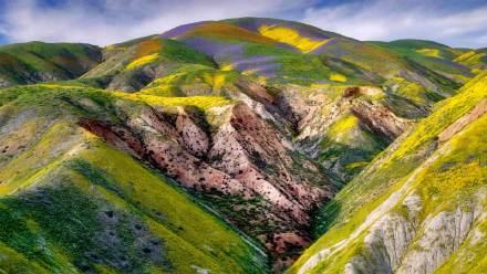加利福尼亚卡里佐平原国家纪念区的野花
