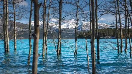 亚伯拉罕湖中的树