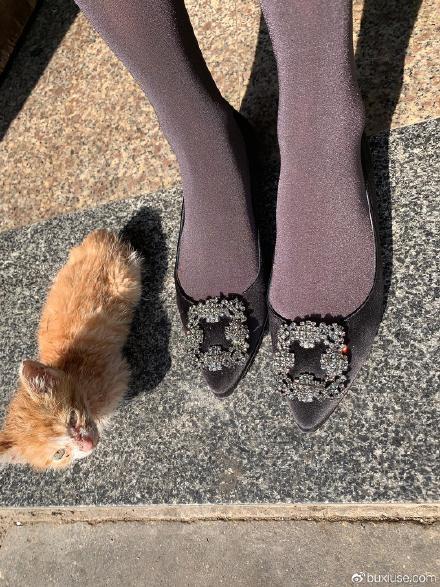 今天下午遇见的小猫咪