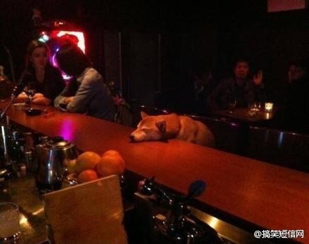 答应我,你从此别在深夜里买醉,不让别的公狗见识你的妩媚 ~