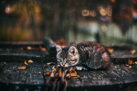 看林间落叶,风景这边独好:却道天凉好个秋