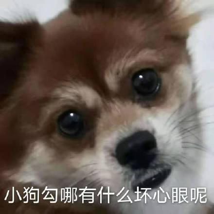 小狗勾哪有什么坏心眼呢