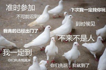 鸡和鸭都被富婆包养了,为什么鸽子还没有? 趣事儿 第1张