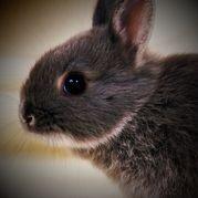 性感倒霉的兔子微博照片