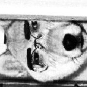 狗牙撸不死